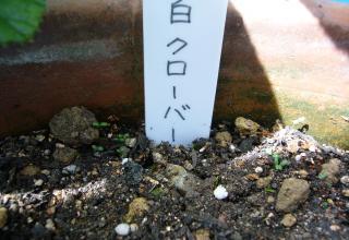 りんちゃん.1029jpeg