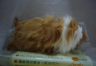 りんちゃん.1091jpeg