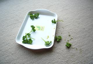 りんちゃん.1680jpeg
