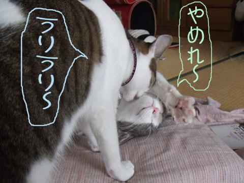 furai_friendry.jpg