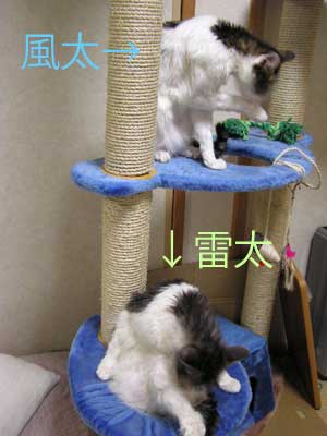 furai_furogo.jpg