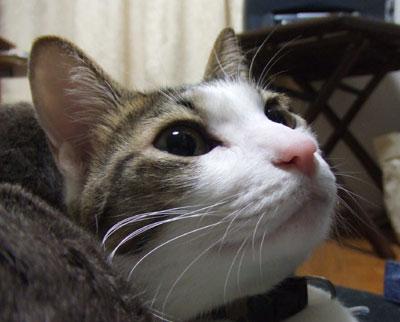 futa_up200602.jpg