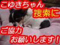 koyukibana.jpg