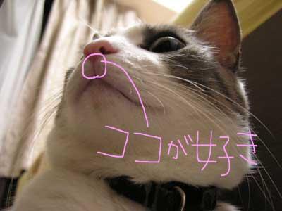 rai_kokogasuki2.jpg