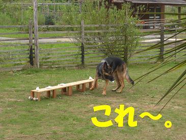 CIMG0881_sh01.jpg