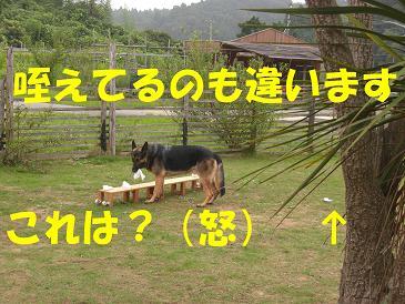 CIMG0899_sh01.jpg
