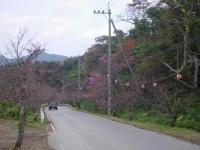 八重岳の坂道