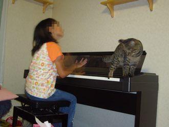 piano-dayan.jpg