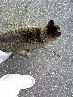 ネコさん3