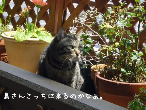 ミュウちゃん3