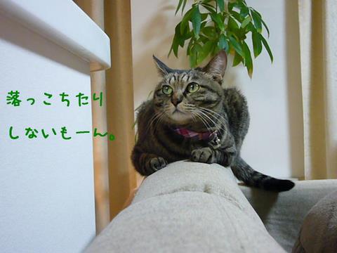ミュウちゃん