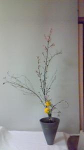 桜・雪柳・ピンポン菊