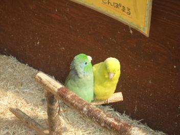 神戸花鳥園 3