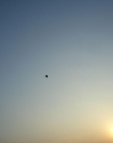 夕空に鳥が