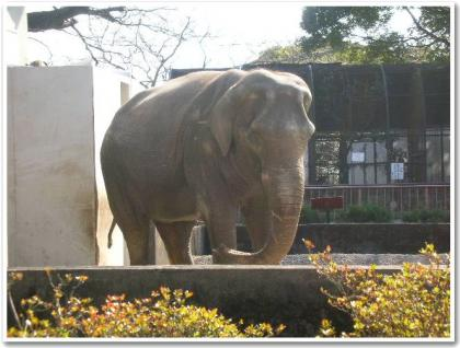 びっくり動物園w