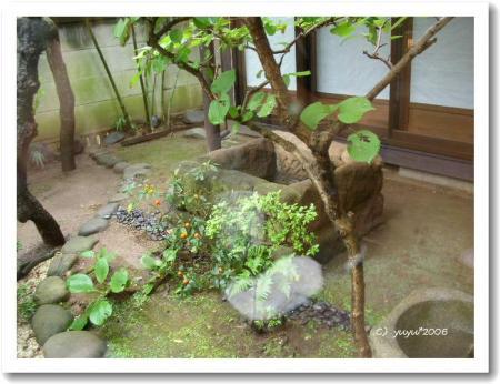 中庭の古井戸
