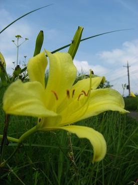 北富士の草花3