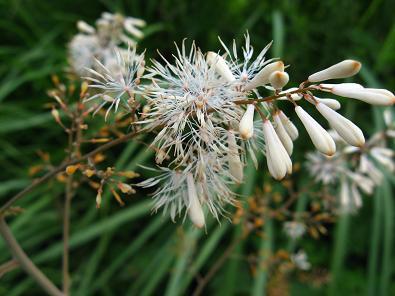北富士の草花4