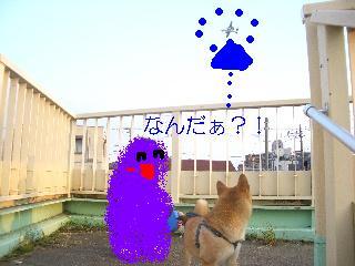 CIMG3839め