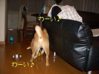 CIMG3870れ