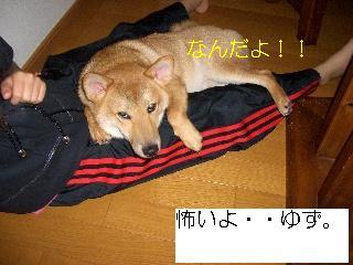 CIMG3898め