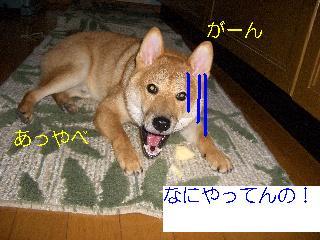 CIMG3908れ