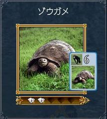 7.26 ゾウガメ