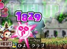 Maple0596.jpg