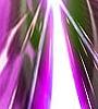 20070118003149.jpg
