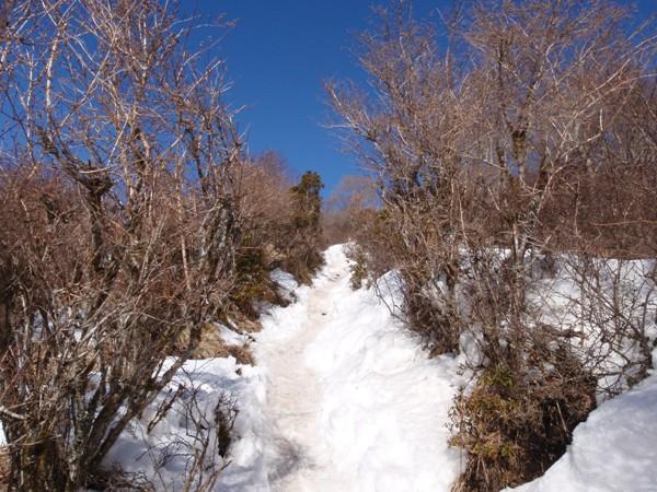 雪の登山道を往く