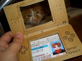 なめ猫ヽ(*´▽`*)ノなめ猫