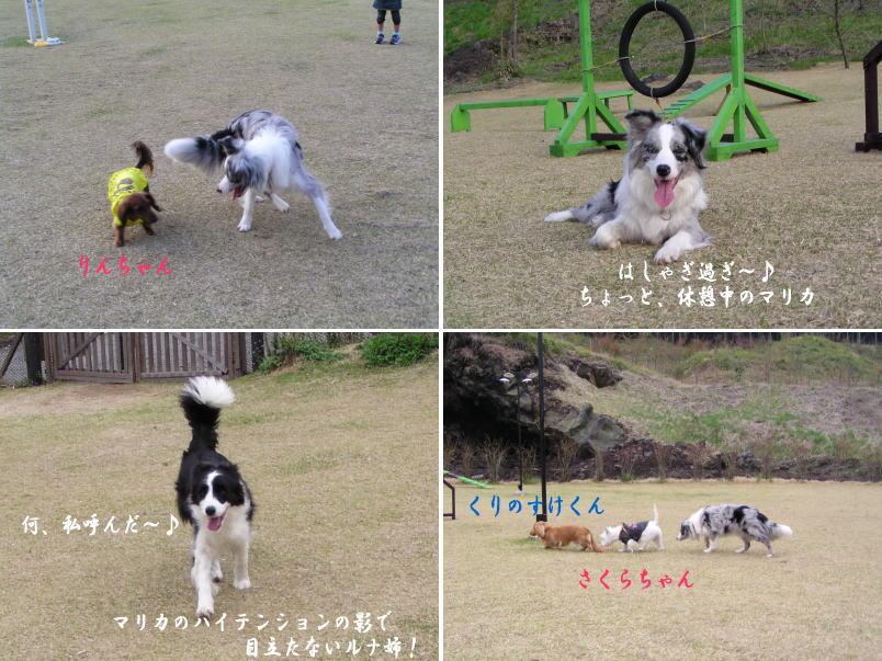 犬連れ旅行2