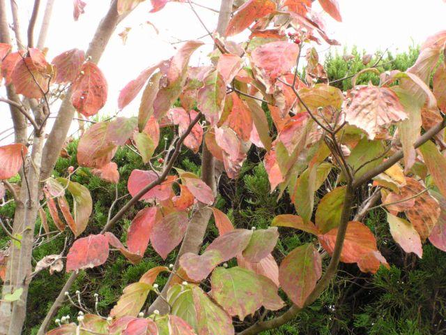 秋の照り葉