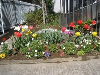 娘の通園しているところのお花たち