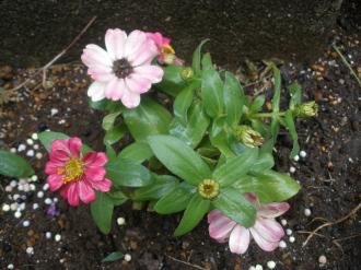 心安らぐお花たち