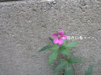 愛すべきお花たち