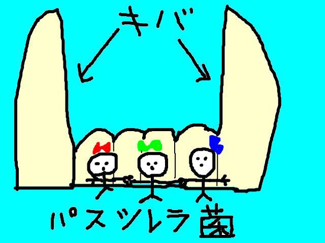 snap_chibitaseiko_200955231221.jpg