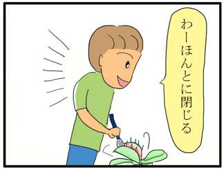 食虫植物02