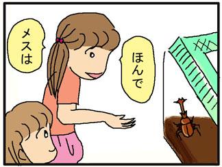 カブトムシの説明02