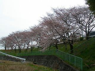 坂戸市春 038