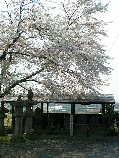 甘楽桜祭り 053