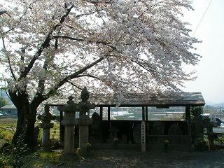 甘楽桜祭り 054