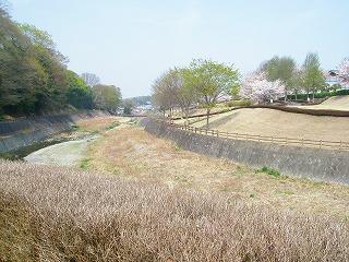甘楽桜祭り 048