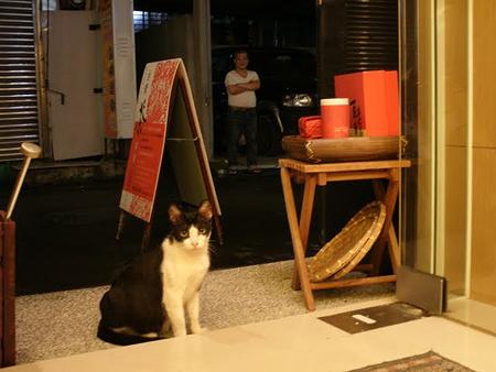 永康街 猫
