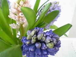 まごころさんの花