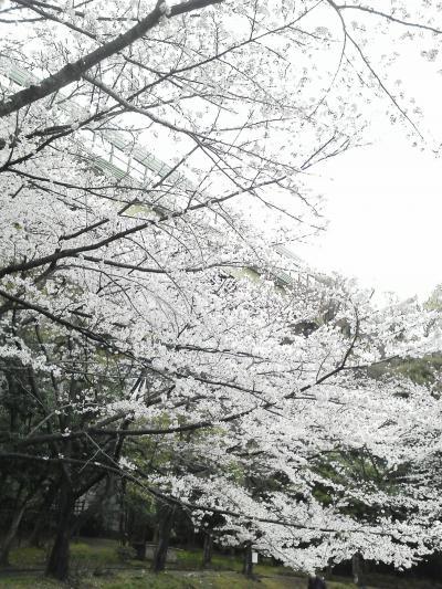 春の症状。