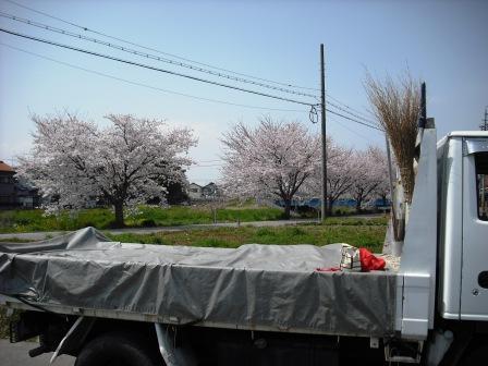 五条川の桜 岩倉