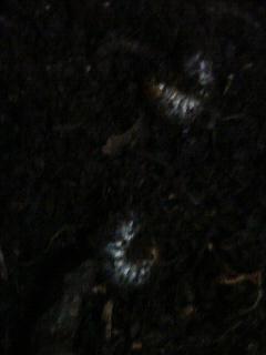 プランター 土 虫