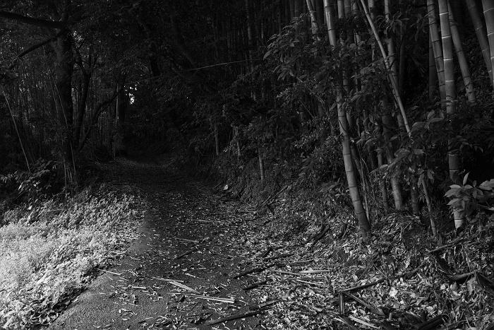 墓場への道