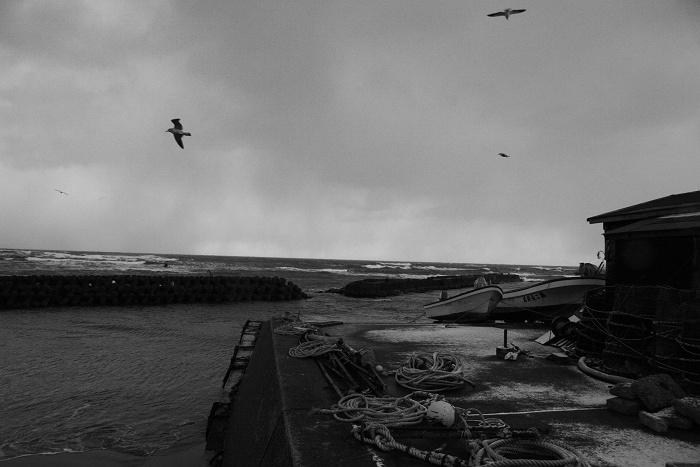 何処へ帰るの、海鳥たちよ  シベリアおろしの、北の海